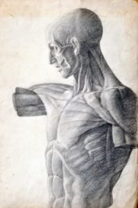 anatomy-drawing-courses